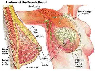 Những điều cần biết về bệnh ung thư vú (Phần 1).