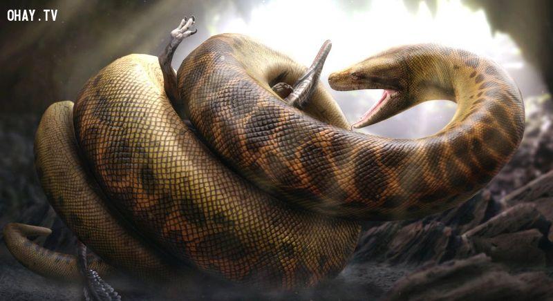 ảnh rắn Titanoboa,rắn khổng lồ Titanoboa,quái vật Titanoboa,quái vật,động vật khổng lồ