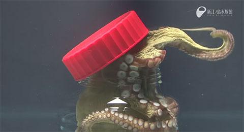 Bạch tuộc xứng đáng là loài vật không xương sống thông minh nhất