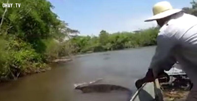 ảnh rắn Anaconda,loài rắn,rắn khổng lồ