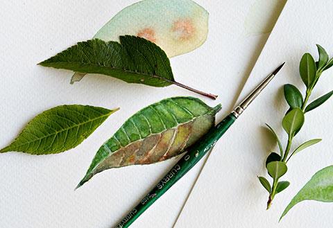 Làm cách nào để vẽ được những chiếc lá dễ cơ bản bằng màu nước?