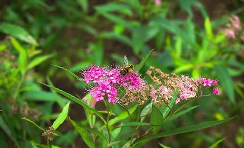 Sapa xứ sở loài hoa xứ lạnh
