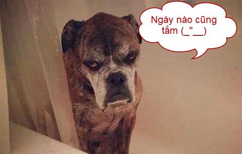 Phản ứng bá đạo của các vật nuôi khi được tắm