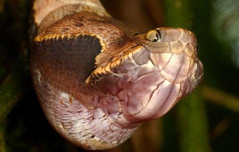 Đây không phải là một con rắn, nhưng nó thực sự rất... rợn
