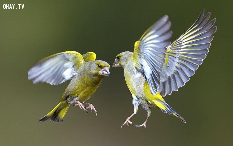 ảnh các hành đồng âu yếm,lãng mạn,nụ hôn,động vật thể hiện tình cảm,tình cảm của động vật