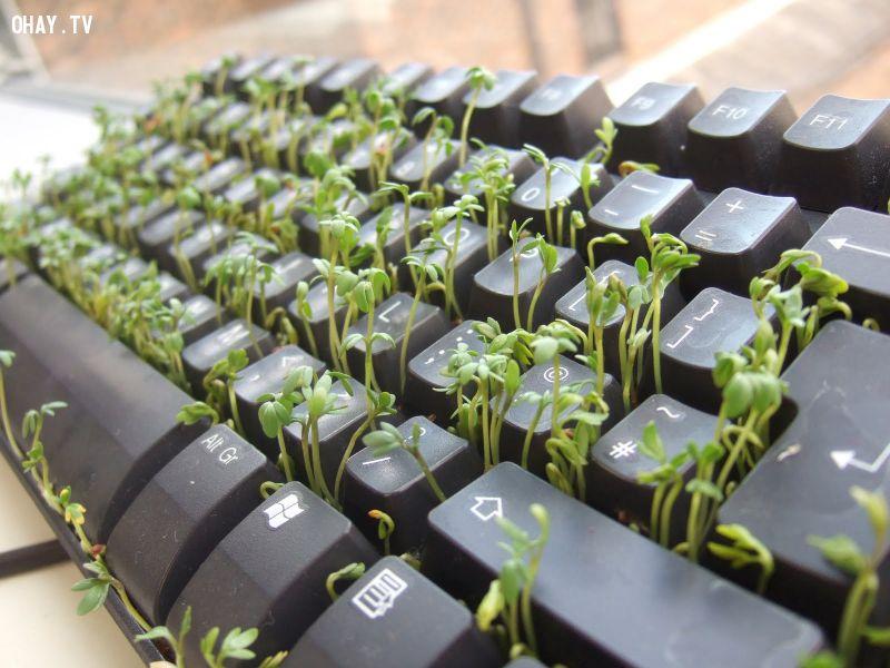 ảnh tận dụng đồ cũ,bàn phím hỏng,tận dụng bàn phím hỏng,mẹo vặt,mẹo hay