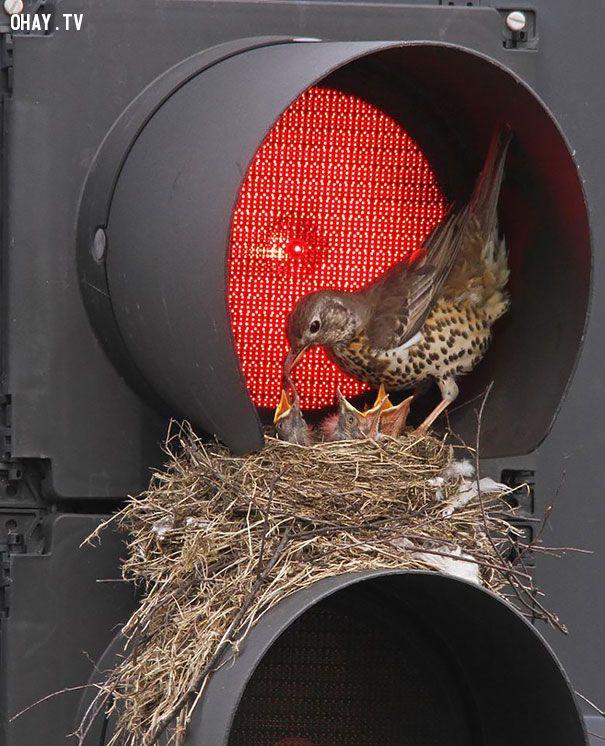 ảnh tổ chim,chim làm tổ ở đâu,vị trí làm tổ của chim,cách chim làm tổ