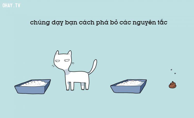 ảnh nuôi mèo,sống chung với mèo,vật nuôi,lợi ích của nuôi mèo