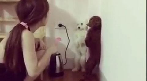 Video cô gái dạy chó hot nhất trong ngày