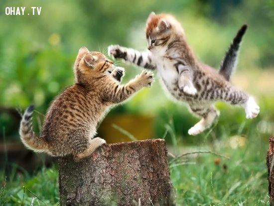 ảnh động vật,khoảnh khắc đáng yêu