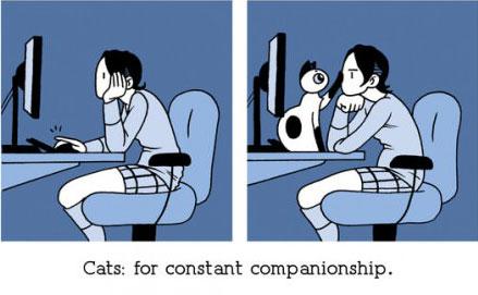 Khi bạn sống với một chú mèo