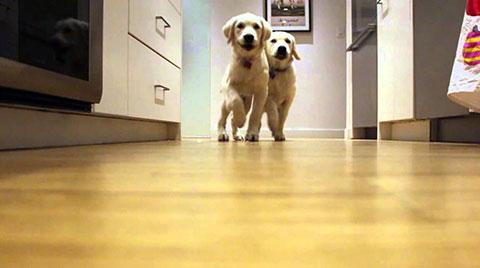Quá trình lớn lên của 2 chú cún trong 9 tháng