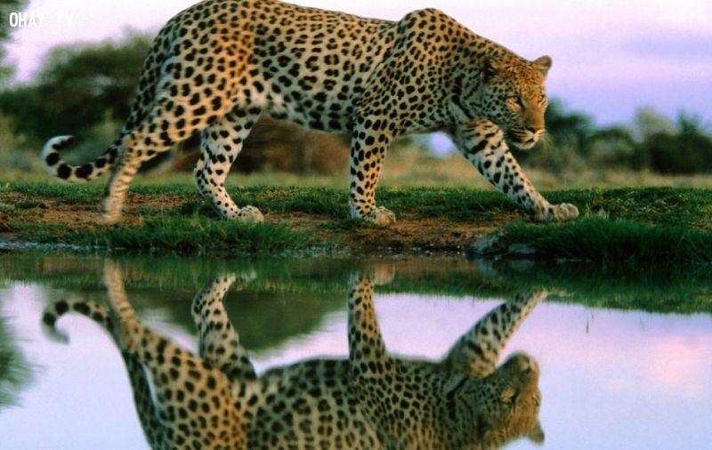ảnh động vật,thế giới động vật,có thể bạn chưa biết