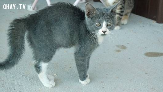 kitten with busy tail