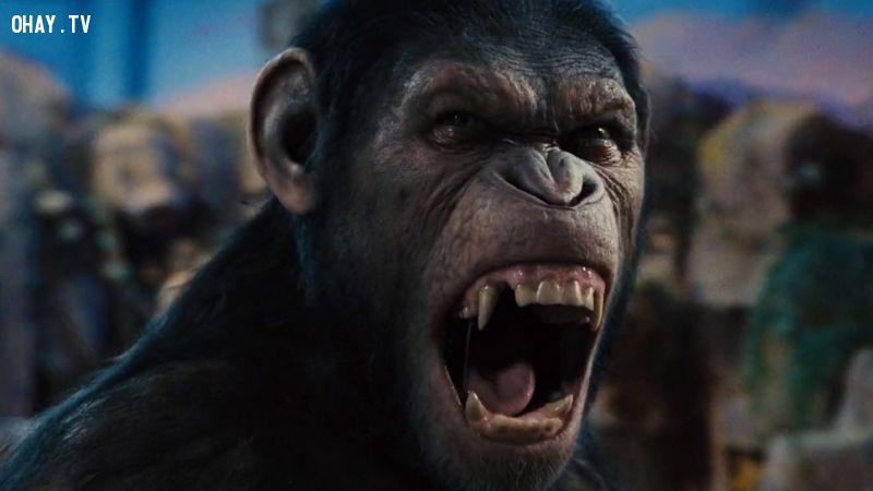 ảnh trái đất diệt vong,loài người không còn tồn tại,loài người,làm phim,chủ đề phim