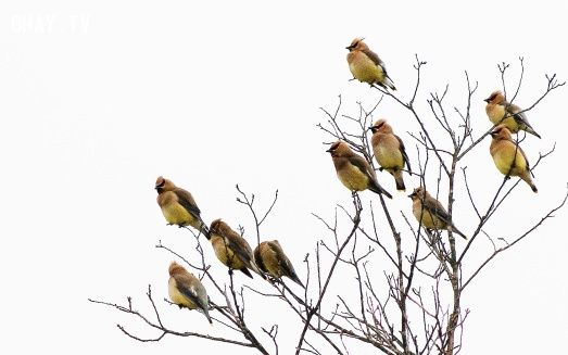đàn chim 10 con