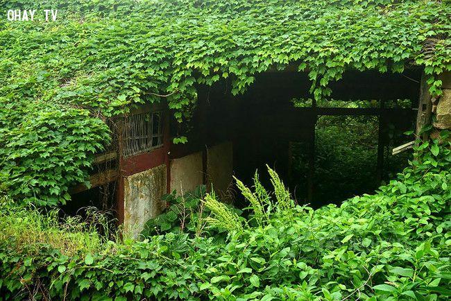 ảnh Ngôi làng bị bỏ hoang,làng chài bỏ hoang,Shengsi Archipelago