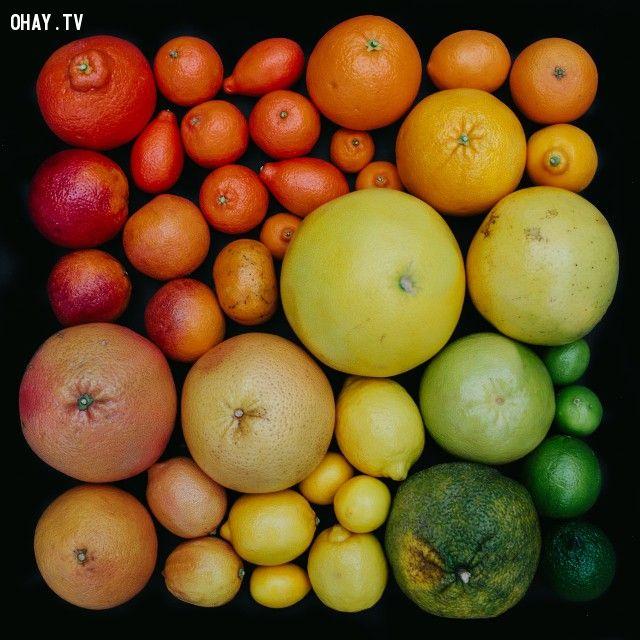 ảnh trái cây,nghệ thuật