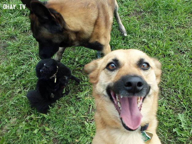 ảnh động vật tự sướng,chụp ảnh tự sướng,selfie