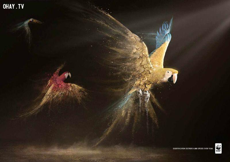 ảnh bảo vệ động vật,poster ý nghĩa,poster sáng tạo,poster bảo vệ động vật,sáng tạo