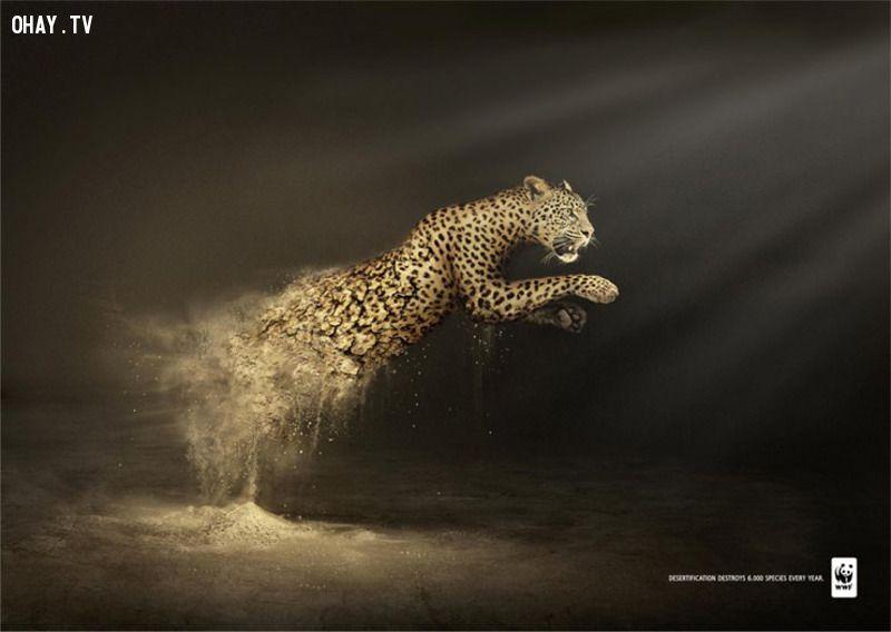 bảo vệ động vật