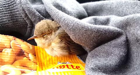Chú chim nhỏ đã gặp một người tốt