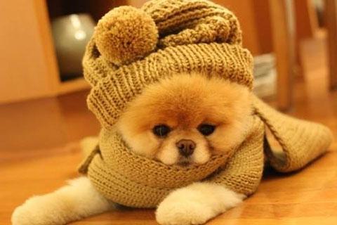Những chú cún cưng cực đáng yêu