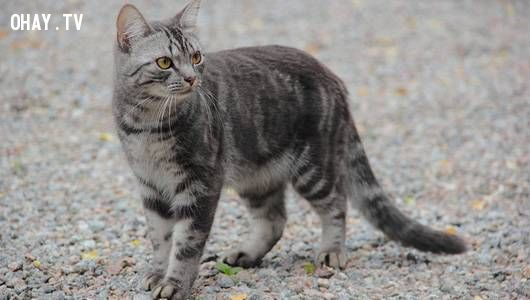 cat with lowered tail