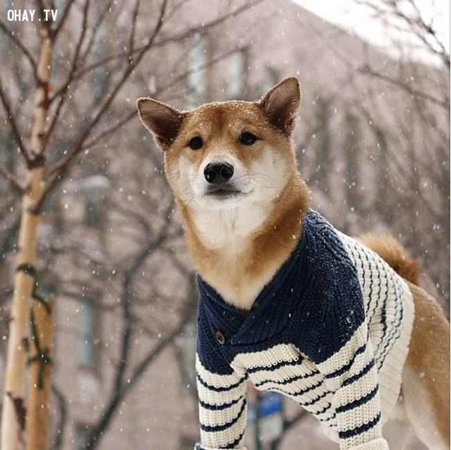 ảnh chú cún,đáng yêu,thú cưng,thú cưng đáng yêu,cún đáng yêu,hình ảnh cún cưng