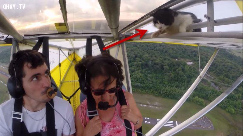 ảnh mèo nằm trên cánh máy bay,vật nuôi,máy bay