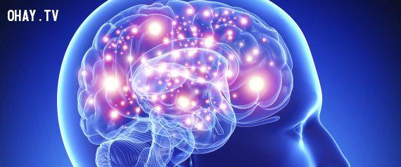 ảnh nhóm máu và não,nhóm máu và chức năng não,nhóm máu và não nhiều chất xám,nhóm máu o,nhóm máu