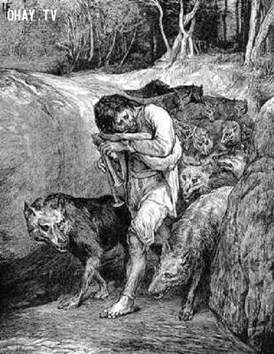 ảnh người sói,bí ẩn người sói