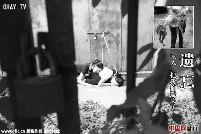 ảnh ăn thịt chó,người và chó đổi chỗ cho nhau,ngược đãi động vật,trung quốc