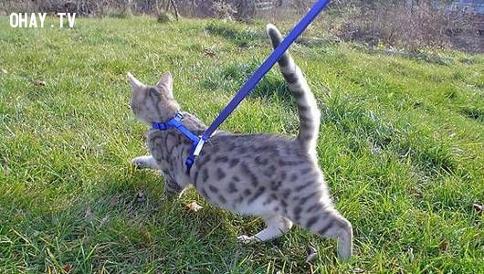 cat with high, straight tail