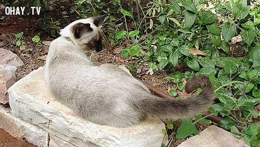 cat swishing tail