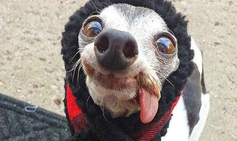 Chú chó làm bất cứ ai cũng phải mỉm cười