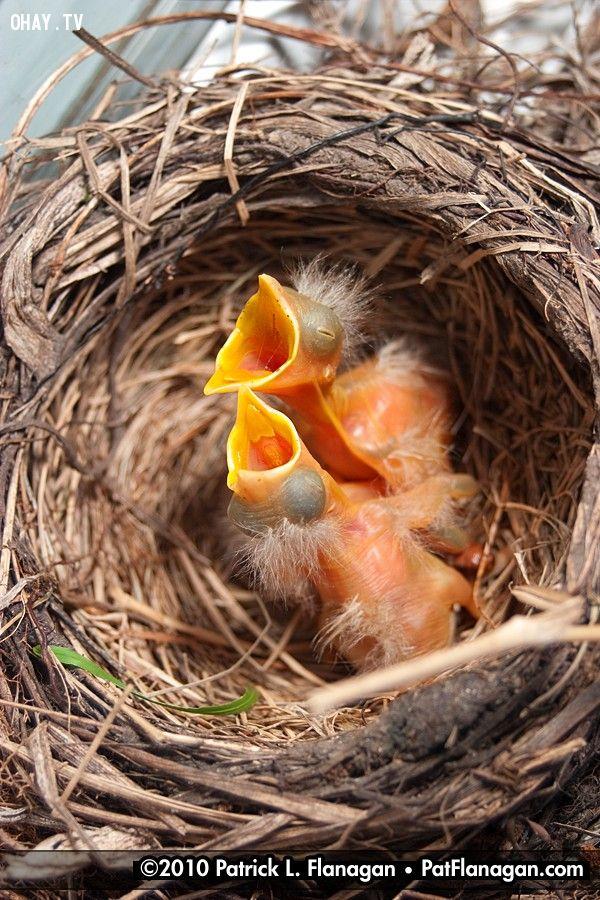 ảnh chụp chim,khoe chim,nhiếp ảnh gia,bảo vệ động vật,vấn đề gây tranh cãi