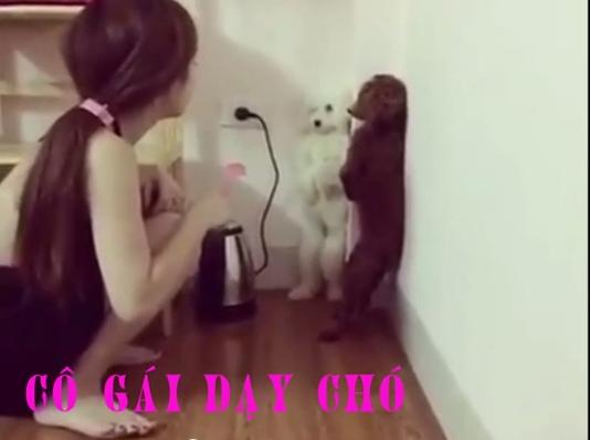 ảnh dạy chó,cô gái dạy chó,chó xỉu,gái đẹp dạy chó,video hài hước