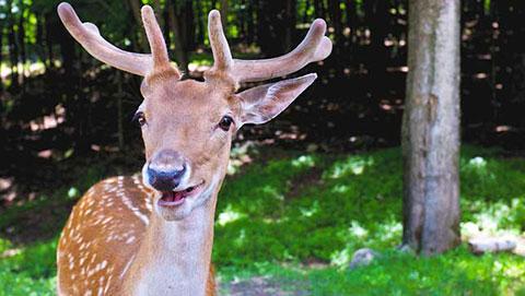 """18 bức ảnh chứng minh động vật biết \""""cười\"""""""