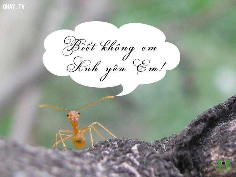 ảnh có khi nào rời xa,anteo,antet,kiến vàng,chuyện tình