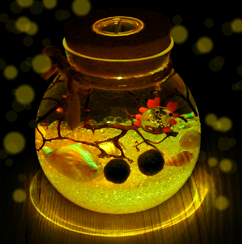 Marimo, thực vật thủy sinh, thú cưng marimo, nuôi marimo