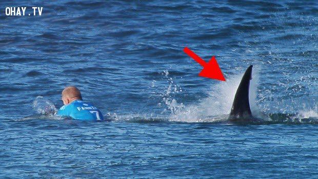 ảnh cá mập,cá mập tấn công,Mick Fanning