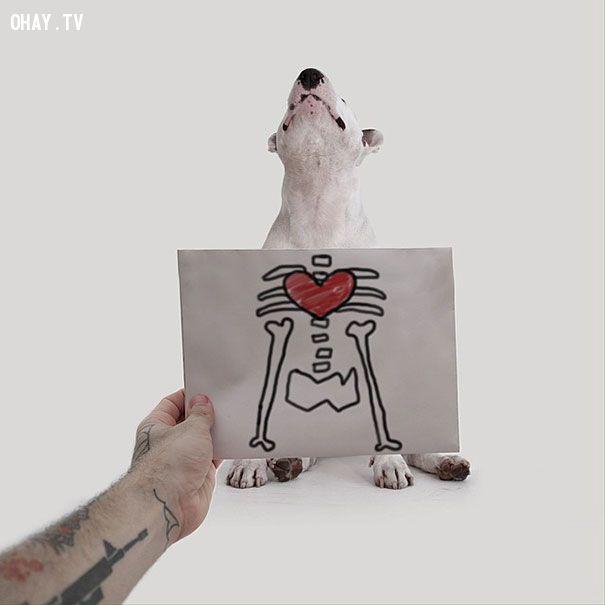 ảnh ảnh sáng tạo,sáng tạo,chó bun,chó sục bun