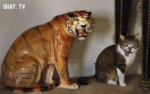 ảnh động vật làm duyên,động vật tự sướng,vật nuôi