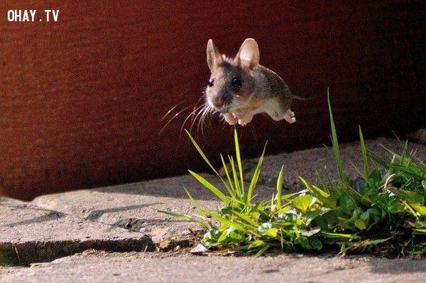 Tôi muốn được bay và không gì là không thể!