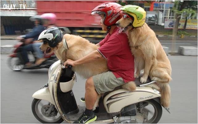 ảnh bất bình đẳng,người và chó,suy ngẫm