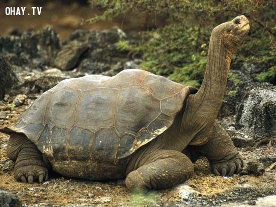 ảnh động vật,sống dai,sống lâu,tuổi thọ