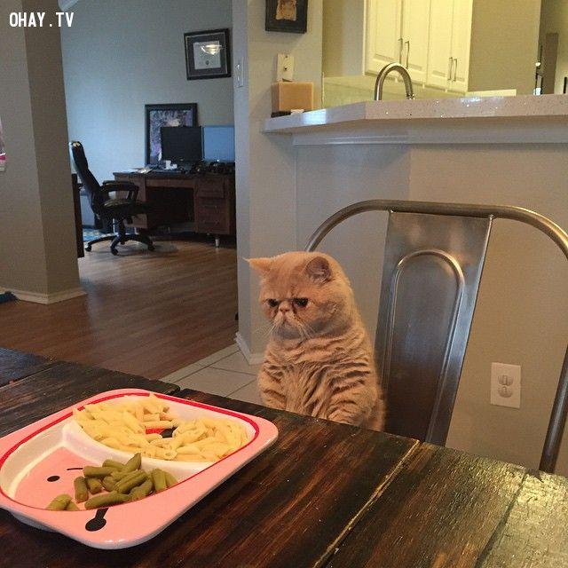 Nhìn bữa ăn bằng khuôn mặt bí xị.
