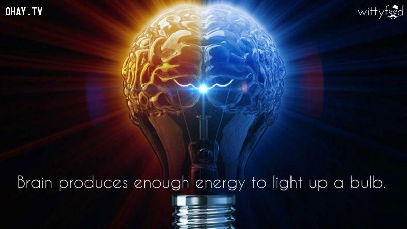 ảnh bộ não,sự thật khó tin,tập thể dục não,phát triển não,phát triển tế bào não,có thể bạn chưa biết