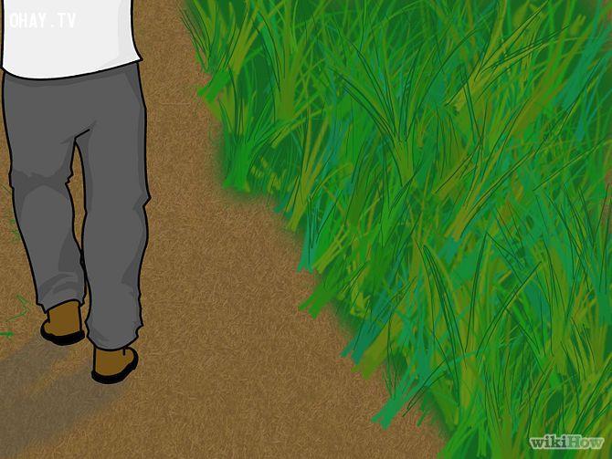 Avoid Snakes Step 2.jpg